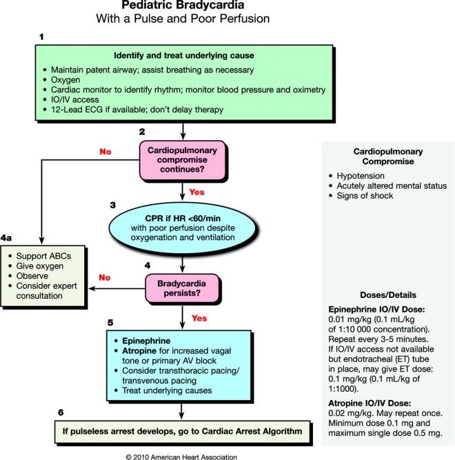 Pediatric Bradycardia Algorithm