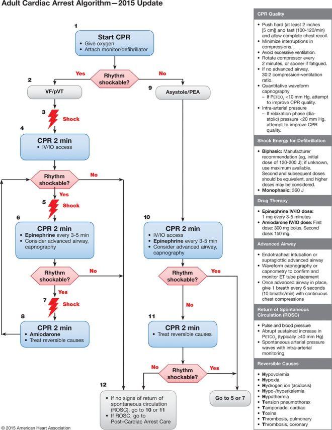 AHA 2015 adult cardiac arrest algorithm